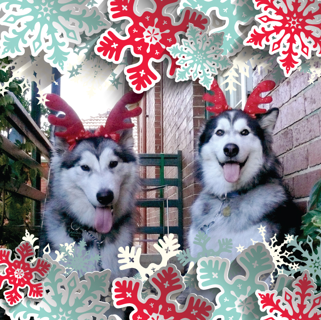 Web Prophets dogs Luna and Arnie with reindeer antlers